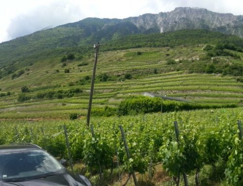 Marie Therese Chappaz : Queen of the Terraced Valais