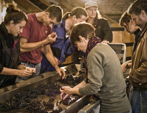 A Motley Crew Making Burgundy That Rings True: Domaine Tawse